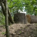 Gefällter Baum im Grünen